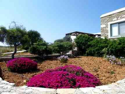 Ferienhaus Frangiska 3, Antiparos, Antiparos, Kykladen, Griechenland, Bild 7