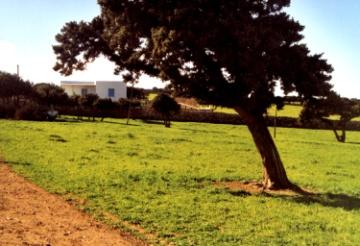 Ferienhaus Michalis 1, Antiparos, Antiparos, Kykladen, Griechenland, Bild 9