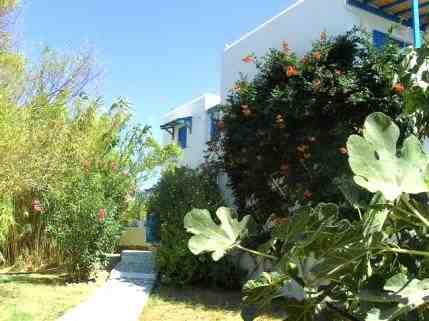 Holiday apartment Studios Ermina, Livadi, Serifos, Cyclades, Greece, picture 6