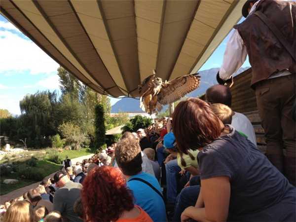Ferienwohnung Fiona , Locarno-Minusio, Lago Maggiore (CH), Tessin, Schweiz, Bild 21