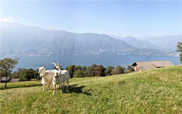 Ferienhaus Casa Gioia, Gerra  Gambarogno, Lago Maggiore (CH), Tessin, Schweiz, Bild 30