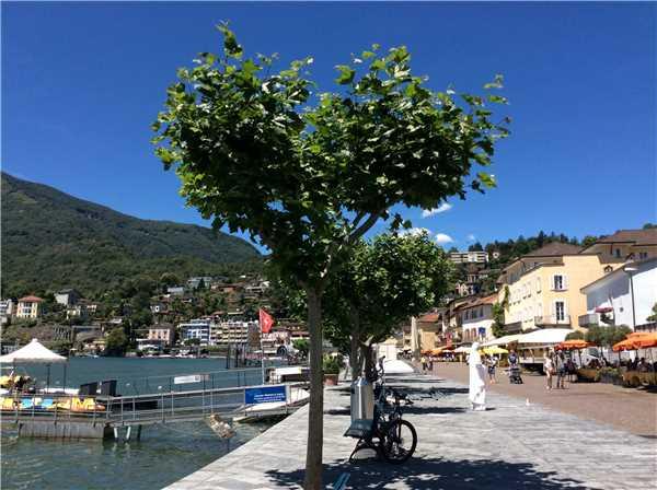 Ferienwohnung Verena , Ascona, Lago Maggiore (CH), Tessin, Schweiz, Bild 24